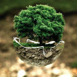 世界の樹木葬