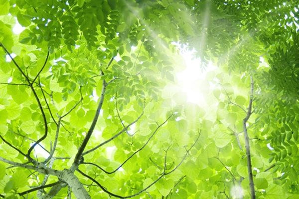 樹木葬と散骨の違い