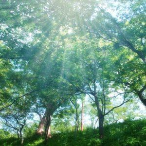樹木葬のイメージで光が森に降り注いでいる