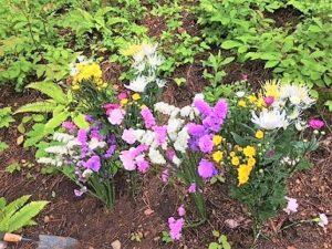 樹木葬,花,仏花