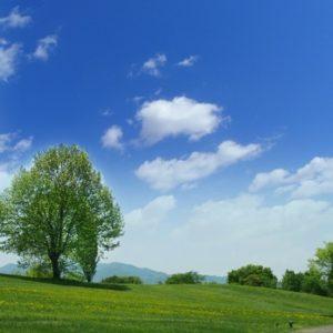 木,樹木葬