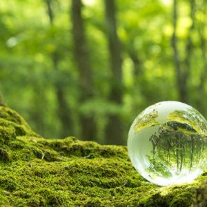 森林の中のガラス玉が地球を表している