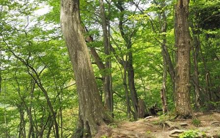 里山再生,樹木葬